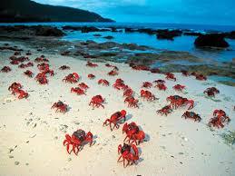 christmas island australia all you need to know