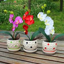 Orchid Plants Aliexpress Com Buy 100pcs Phalaenopsis Orchid Seeds 22 Varieties