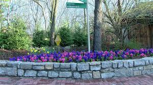 Botanical Garden Cincinnati Zoo Blooms Wkrc