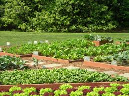 vegetable garden design modern minimalist container vegetable