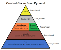 crested gecko food pyramid complete critter