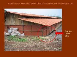 Termometer Kandang Ayam 10 hari pertama pemeliharaan broiler