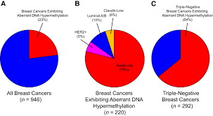 dysregulation of the epigenome in human breast cancer the
