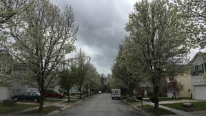indiana dnr urges homeowners to stop planting ornamental pear