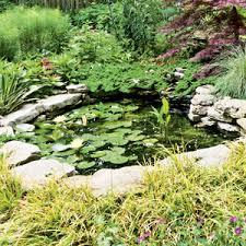 Fish For Backyard Ponds Fish For Garden Ponds Rodale U0027s Organic Life
