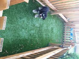dog runs dog run perfect turf patio and backyard pinterest