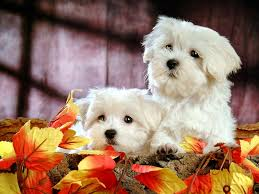 cute puppies 2 wallpapers fluffy and cute puppy xcitefun net