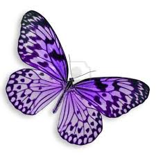 purple butterfly flying isolated on white background stock photo