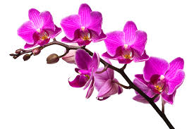 orchid pictures 7 tips for orchid care