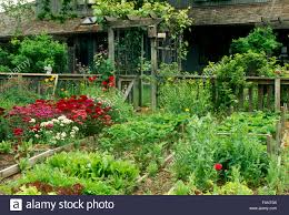 backyard fenced in vegetable and flower garden planted in raised