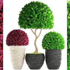 topiary trees 3d topiary trees buxus cgtrader
