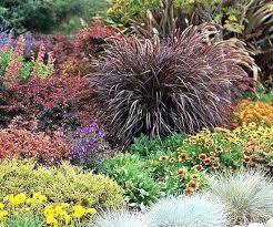ornamental grass landscape design top ornamental grasses pictured is