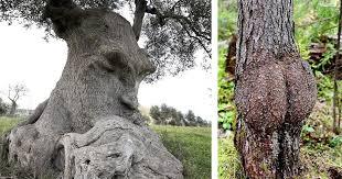 40 unique trees that definitely look like something else