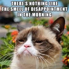 Tardar Sauce Meme - 410 best tardar sauce grumpy cat images on pinterest funny stuff