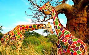 colour giraffe home decor canvas print choose your size ebay