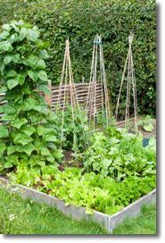 this is the coolest gardening site ever on the gardeners supply