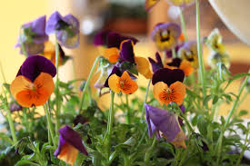 easy easter ideas how to decorate your home for spring