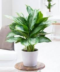 houseplants that need little light 15 excellent diy backyard decoration outside redecorating plans 2