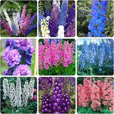 aliexpress com buy bellfarm different types of delphinium