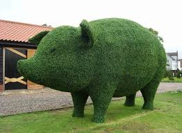 Topiary Plants Online - live topiary plants best topiary plants u2013 iimajackrussell garages