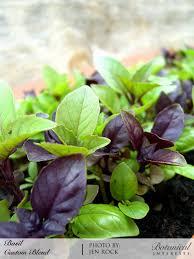 indoor herb garden kits to grow herbs indoors hgtv organic gardening planting herbs in pots indoor herb planter