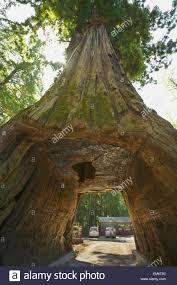 Tree Chandelier Chandelier Drive Through A Coast Redwood Tree California United
