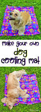 Cool Off With A Walk by Best 25 Cool Dog Stuff Ideas On Pinterest Dog Hacks Dog