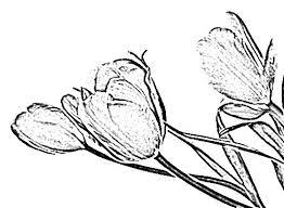 image sketch february 2011