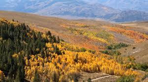 mono county fall colors 28 images fall colors mono county