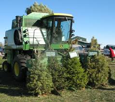 christmas tree farm precut trees cut your own christmas tree down