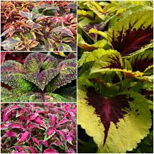 top 10 flowers and foliage fairview garden center