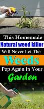 how to kill weeds using vinegar balcony garden web