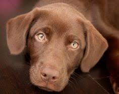 best pet flooring options for dogs flooring options