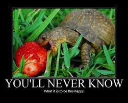 Be Happy Meme - you will never be this happy animals know your meme