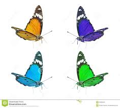 colorful flying butterflies clip art royalty free stock images