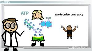 balanced chemical equation for photosynthesis video u0026 lesson