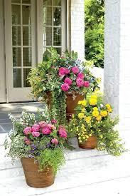 Outdoor Container Gardening Ideas Outdoor Container Gardening Best Shrubs For Containers Outdoor