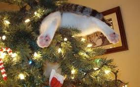 it s time is your tree ready with cats