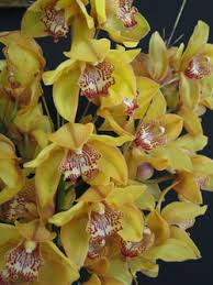 buy an orchid orchids for sale london florist buy online