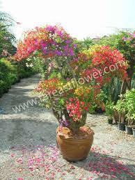 tropical plants and ornamental plants buy garden plants product