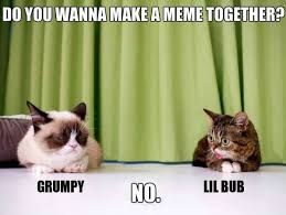 Lil Bub Meme - a candid shot of grumpy cat and lil bub hanging out again grumpy
