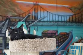 oakland cat town nation u0027s first cat cafe opens time com