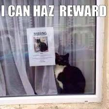 Missing Cat Meme - cat next to own missing flyer on imgfave