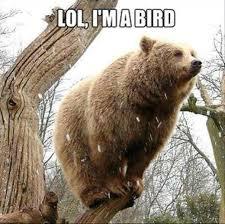 Bear Meme - i forgot how to bear meme by shadow4ya memedroid