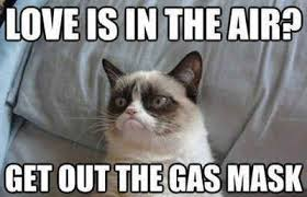 Grumpy Cat Meme Valentines Day - valentine s day is coming and grumpy cat has some thoughts about it