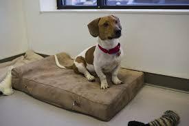 Barker Dog Bed Big Barker Donates Beds To Paws Pet Age