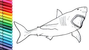 drawing and coloring megalodon shark how to draw dinosaurs color