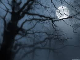 moon with tree images on we it