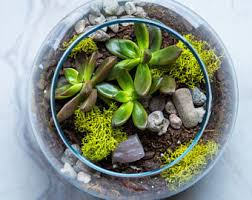 cube glass vase air plant terrarium living decor diy kit gift
