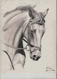 print of charcoal horse drawing by theresa paden portion of sales